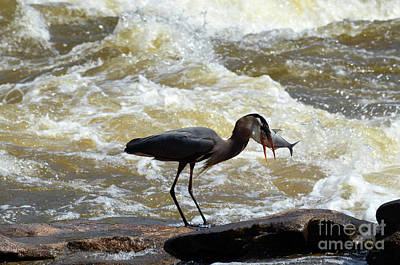 Photograph - Lunch In The James River 14 by Afroditi Katsikis