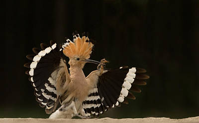 Avian Photograph - Lunch Is Ready by Giulio Zanni