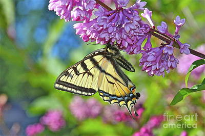 Photograph - Colors Of Summer by Rick Monyahan