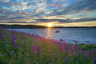Photograph - Lupine Sunset On Long Lake by Darylann Leonard Photography