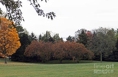 Photograph - M Landscapes Fall Collection No. Lf68 by Monica C Stovall