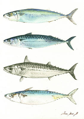 Fishing Painting - Mackerel Fishes by Juan Bosco