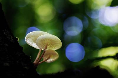 Photograph - Magic Mushrooms by Mircea Costina Photography