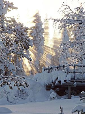 Photograph - Magic Winter by Tamara Sushko