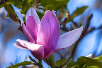 Photograph - Magnolia  by Jonathan Nguyen