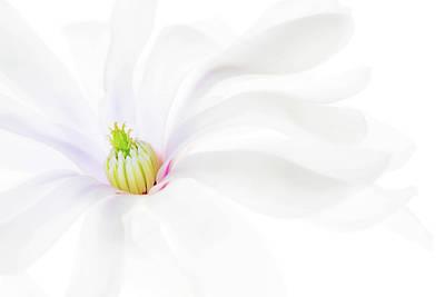Photograph - Magnolia by Rebecca Cozart