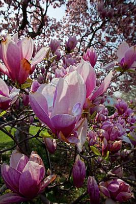 Soap Suds - Magnolias by Robert Ullmann