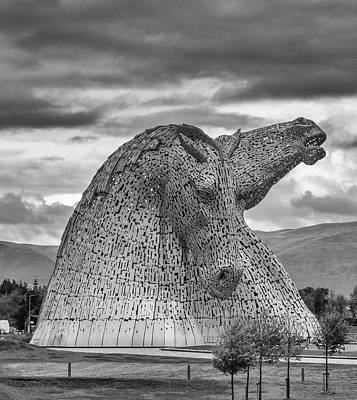 Kelpie Photograph - Majestic. by Angela Aird