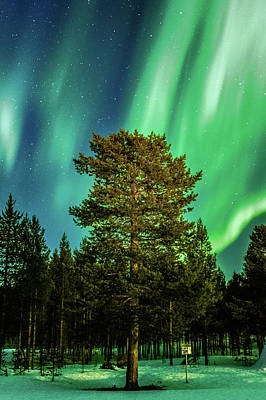Majestic Tree Under The Northern Lights Karasjok Norway Art Print