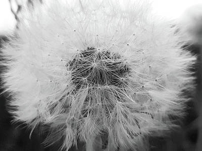 Photograph - Make A Wish by Tiffany Erdman