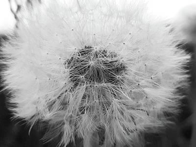 Photograph - Make A Wish by Tiffany Erdman