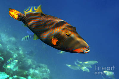 Photograph - Maldives by Juergen Held