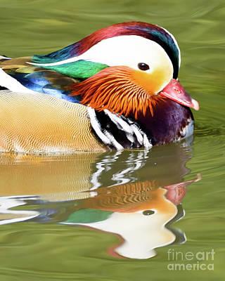 Photograph - Mandarin Duck by Colin Rayner