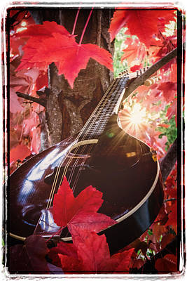 Photograph - Mandolin Autumn II by Mick Anderson