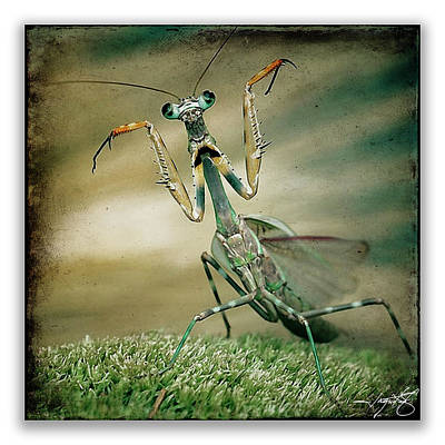 Mantis 16 Art Print by Ingrid Smith-Johnsen