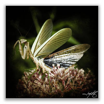 Mantis 22 Art Print by Ingrid Smith-Johnsen