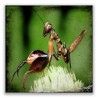Mantis 9 Art Print by Ingrid Smith-Johnsen