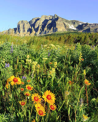 Photograph - Many Glacier Wildflowers by Jack Bell