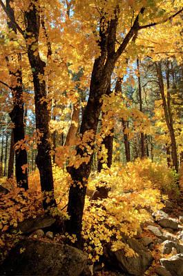 Photograph - Maple Leaves  by Saija Lehtonen