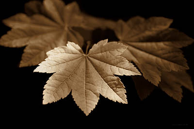 Photograph - Maple Leaves Sepia by Jennie Marie Schell