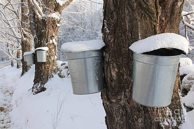 Sugaring Photograph - Maple Syrup Collecting by Larry Landolfi