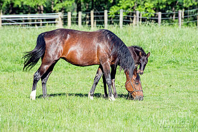 Photograph - Mare And Foal by David Arment