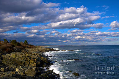 Photograph - Marginal Way by Tom Callan