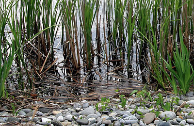 Photograph - Marsh by Mark Alesse