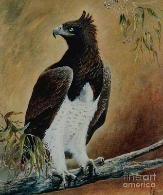 Martial Eagle Painting - Martial Eagle by Rita Palm