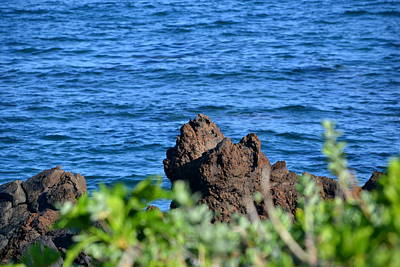 Photograph - Maui Hi by Dean Ferreira