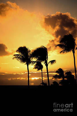 Photograph - Maui Sunset Palms by Kelly Wade