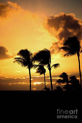 Photograph - Maui Sunset Palms by Kelly Wade