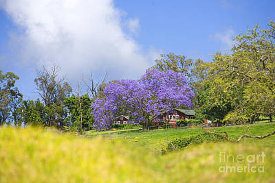 Maui Upcountry Art Print by Ron Dahlquist - Printscapes