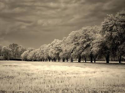 Surreal Infrared Sepia Nature Photograph - Meadow In Infrared by L O C