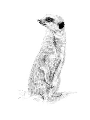 Mixed Media - Meerkat In Charge by Elizabeth Lock