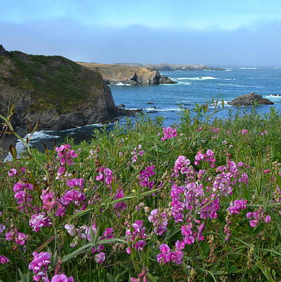 Photograph - Mendocino Headlands by Carla Parris