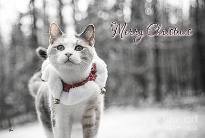 Photograph - Merry Christmas by Alana Ranney
