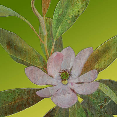 Photograph - Metal Magnolia by Jonah Gibson