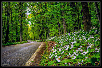 Trillium S Photograph - Mi Tunnel Of Trees by LeeAnn McLaneGoetz McLaneGoetzStudioLLCcom