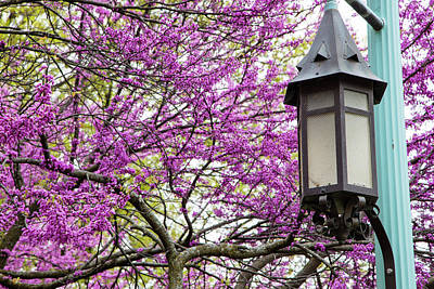 Michigan State University Spring 7 Print by John McGraw