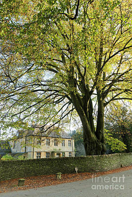 Photograph - Mighty Beech In Naunton by Tim Gainey