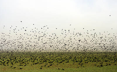 Flock Of Bird Photograph - Migration by Skip Willits