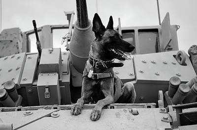 Photograph - Military Buddy by Janeb13