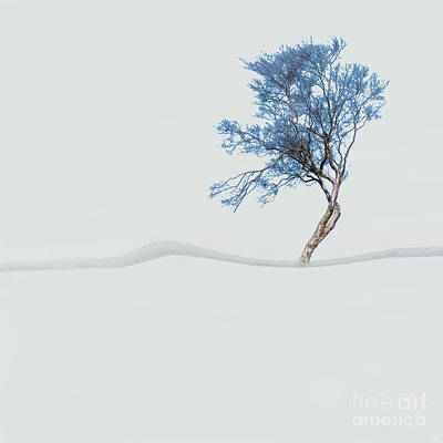 Photograph - Mindfulness Tree by LemonArt Photography