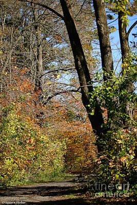 Photograph - Minnesota Trails by Susan Herber