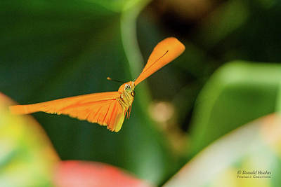 Photograph - Miracle Of Flight by Ronald Hoehn