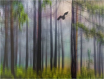 Photograph -  Misty Forest by Vladimir Kholostykh