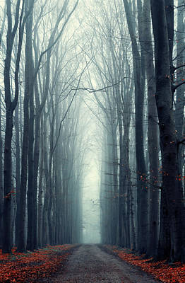 Winter Netherlands Photograph - Misty Lane by Martin Podt