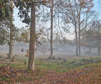Photograph - Misty Morning by Linda Brown