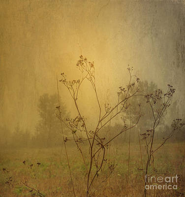 Fields Photograph - Misty Morning. by Robert Brown